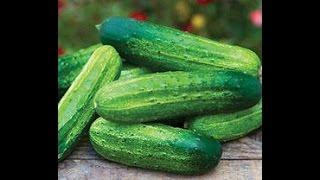 getlinkyoutube.com-Grow cucumbers with less bitterness