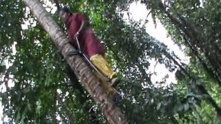 getlinkyoutube.com-Mechanised coconut climbing by women.wmv