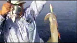 getlinkyoutube.com-Squid Fishing in Greece - Ψάρεμα καλαμαριών