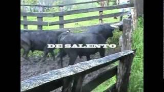 getlinkyoutube.com-Del Campo a la Plaza: El embarque de los toros.