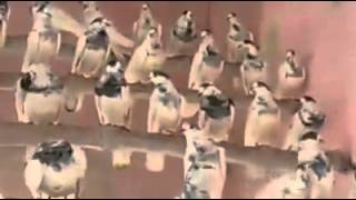 getlinkyoutube.com-35 walay sialkoti pigeons