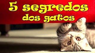 getlinkyoutube.com-5 coisas sobre a vida secreta dos gatos. #02