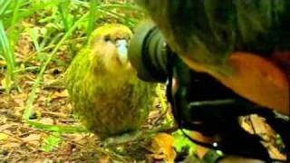 Kakapo - Last Chance to See, Stephen Fry