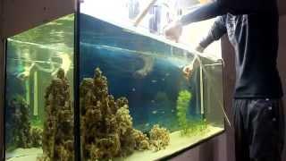 getlinkyoutube.com-мой аквариум ч.3 уход за аквариумом.
