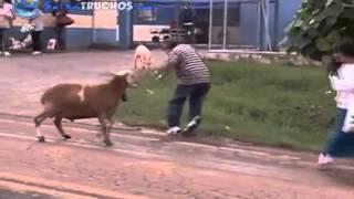 getlinkyoutube.com-Cabra Loca Aterroriza Brazil