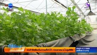 getlinkyoutube.com-เกษตรสร้างชาติ : ปลูกขึ้นฉ่าย ระบบกึ่งน้ำไฮโดรโปนิกส์