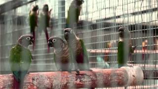 Magnolia Bird Farm: Green Cheek Conure's
