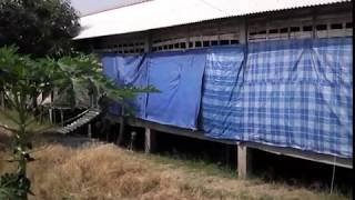 getlinkyoutube.com-Kandang Ayam Kampung HASIL UNGGAS FARM. Ready order DOC Ayam kampung, ayam kampung siap potong