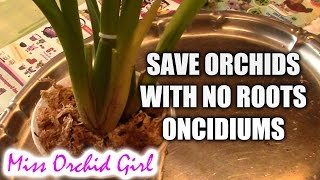 getlinkyoutube.com-How to save an Oncidium orchid without (or with very few) roots