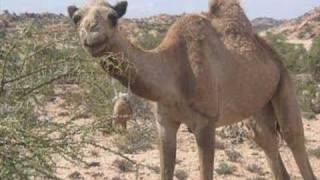 getlinkyoutube.com-Suldaan Timacade (Somalia)