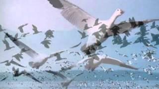 getlinkyoutube.com-موسيقى رائعة للموسيقار اليوناني نيكوس-beginning belalim