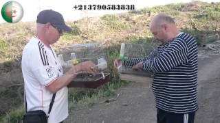 getlinkyoutube.com-من قسنطينة  25 هذا شريط فيديو خاص بمربين الحسون الجزائري  2016