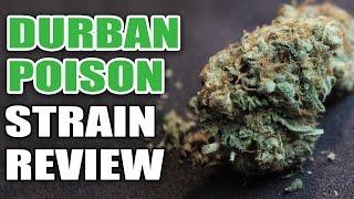Durban Poison Strain Review - Cannabis Lifestyle TV