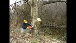 getlinkyoutube.com-κοψιμο καρυδιας(part1)   tree cutting!!!