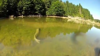 Monster Pike Jumps by Nature Freakz