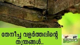 getlinkyoutube.com-Bee keeping - Manorama News Nattupacha