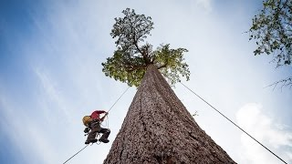 Climbing Big Lonely Doug, Canada's 2nd Largest Douglas-fir Tree