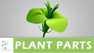 getlinkyoutube.com-Plant Parts