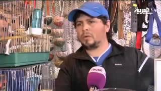 getlinkyoutube.com-طائر الحسون ب 3000$ في الجزائر!