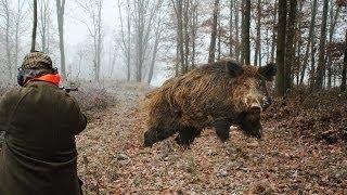 getlinkyoutube.com-Hunting for wild boar. great moments. selection videos of real hunting