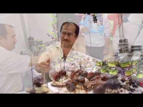 Hormigas culonas de Santander presente en la Feria de las Colonias