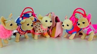 getlinkyoutube.com-Видео с игрушками. Новые подружки собачки Чичи. Chi Chi Love. Видео для девочек.
