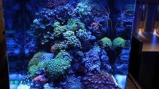 getlinkyoutube.com-ReefTop Aquariums - Miami, FL [Local Fish Store Travel Ep. 10]