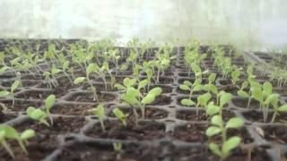 getlinkyoutube.com-Nuevo artilugio para sembrar semillas.