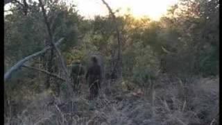 getlinkyoutube.com-Killing the Poachers - Swaziland