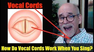getlinkyoutube.com-Ep.9: Singing Basics: How do Vocal Cords Work?
