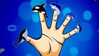Shark Finger Family Children Nursery Rhymes | Cartoon Shark Finger Family Song For Kids