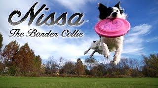 getlinkyoutube.com-Kyle & Nissa - The Border Collie (Parkour Dog Tricks)