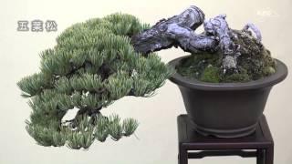 小品盆栽フェアー