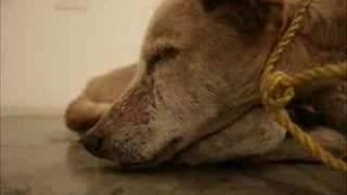 getlinkyoutube.com-Salve os animais