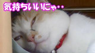 getlinkyoutube.com-猫にクールジェルマットをプレゼントしたらあまりの気持ちよさにすごい顔に‥ present the cold mat to cat