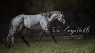 getlinkyoutube.com-Un Forgettable: 2007 Gray AQHA Stallion