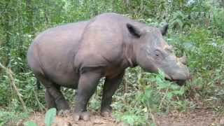 Mark Carwardine & Martina Navratilova introduce Save the Rhino International