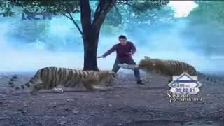 getlinkyoutube.com-Pitaloka dan Karina menjadi harimau Juli 2015