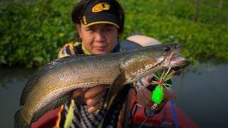 getlinkyoutube.com-เทคนิคการเลือกใช้เหยื่อ ในการตกปลาช่อน