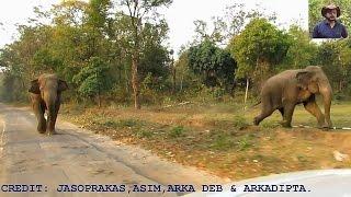 Longest Elephant Chasing Video.