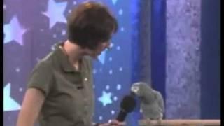 Талантливый попугай