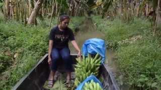 getlinkyoutube.com-ทำสวนปลูกกล้วย - นั่งเรือพายเรียนรู้สวนกล้วยหอมทอง