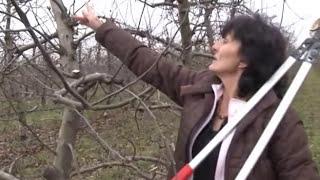 getlinkyoutube.com-Kako pravilno orezati jabuku   U nasem ataru 519