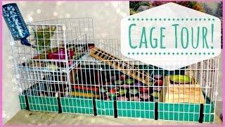 getlinkyoutube.com-Guinea Pig Cage Tour!