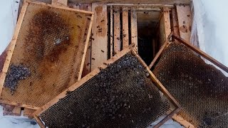 getlinkyoutube.com-Гибель пчёл в лежаке