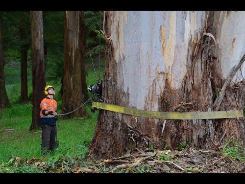 Dangerous Dead Tree Removal Service