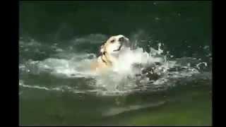 getlinkyoutube.com-Αστεια Βιντεο Με Σκύλους [02]