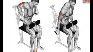 Triceps workouts Anatomy 13 Exercises That Building your Triceps muscle