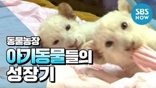 getlinkyoutube.com-SBS [동물농장] - 아기동물들의 성장기