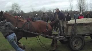 getlinkyoutube.com-Concurs de cai de Florii in Osica de Sus 1